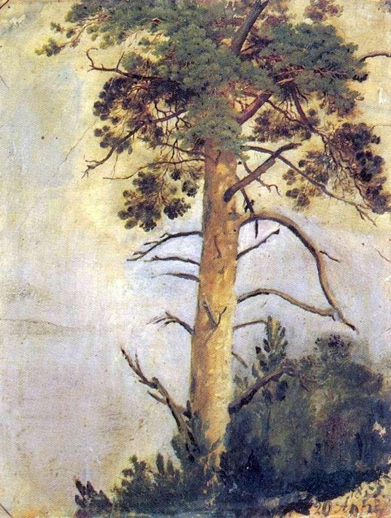Иван Шишкин, 1855 год, картина «Сосна на скале».