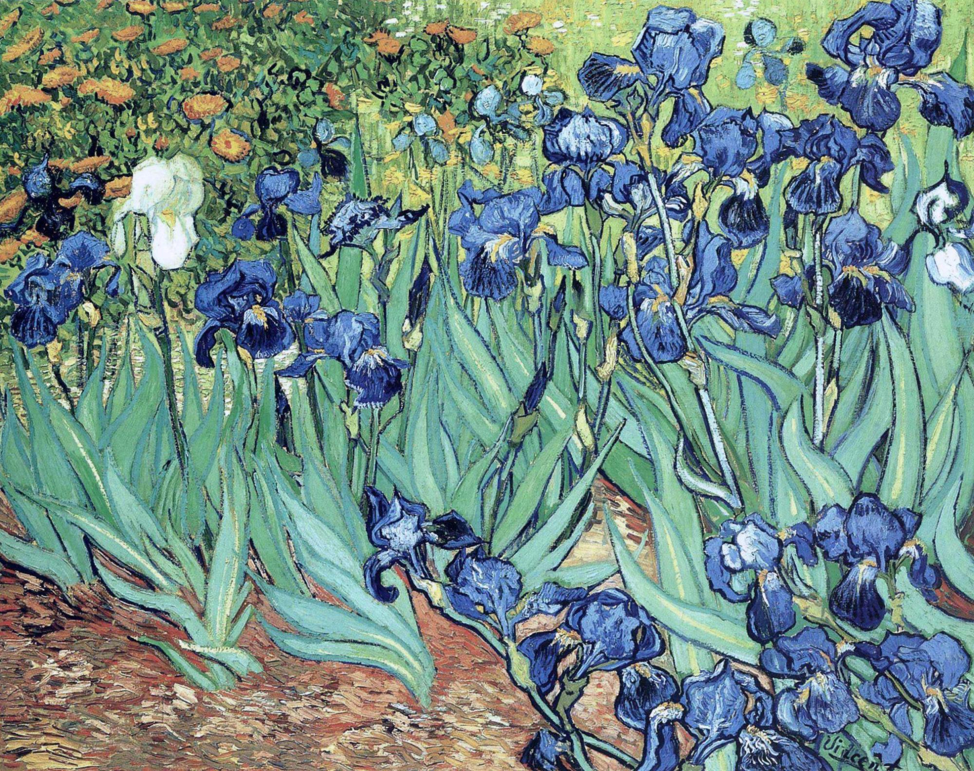 Винсент Ван Гог, 1889 год, картина «Ирисы».